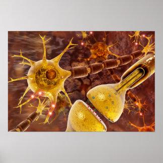 Motoriska Neurons Poster