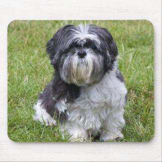 Mousepad för foto för Shih Tzu hund gullig härlig Musmatta
