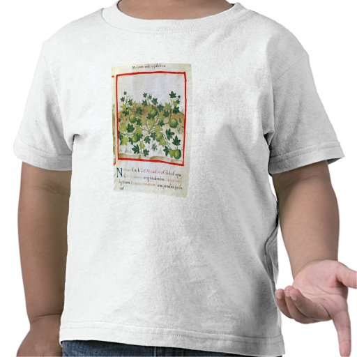 Ms 3054 melnar fol.20, från 'Tacuinum Sanitatis T-shirt