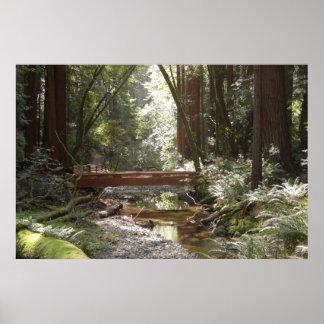 Muir skogen överbryggar II Poster