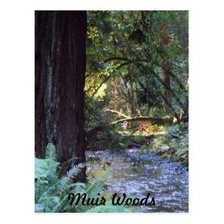 Muir skogen strömmer vykort
