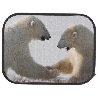 Munhuggas för polarbjörnar bilmatta