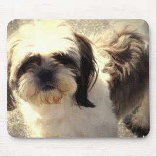 Musen för hunden Shih-Tsu vadderar Musmatta