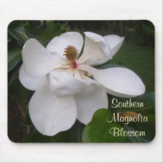 Musen vadderar - den sydliga Magnoliablommar Musmatta