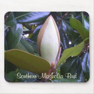 Musen vadderar - den sydliga Magnoliaknoppen Musmatta