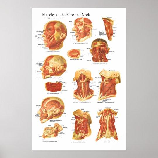 Muskelanatomi Av Ansiktet Och Nacken Kartl 228 Gger Poster