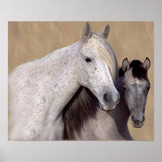 Mustangs Sally och Wilson hästtryck Poster