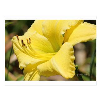 Myra på Flower.jpg Vykort