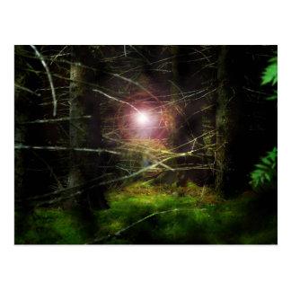 Mystisk skog vykort