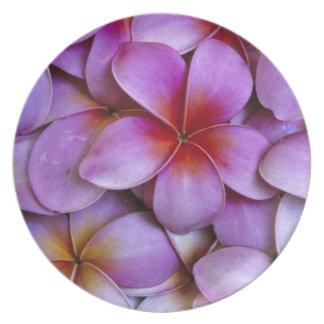 N.A. USA, Maui, Hawaii. Rosa Plumeriablossoms. Tallrikar