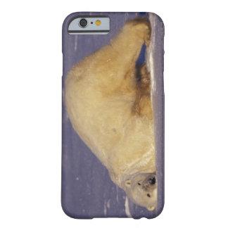 NA Kanada, Manitoba, Churchill, polar björn Barely There iPhone 6 Fodral