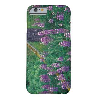 NA USA, Alaska, Aleutian öar, Unalaska, Barely There iPhone 6 Skal