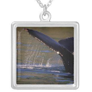 NA USA, Alaska, Southeast Alaska, insida 3 Silverpläterat Halsband