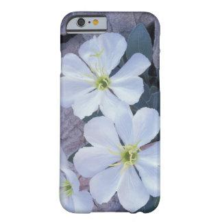 NA USA, Utah, välva sig NP, aftonprimrose Barely There iPhone 6 Skal