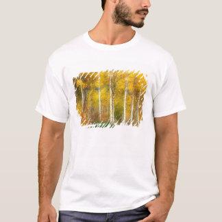 NA USA, Washington, asp- träd för nedgång along Tee Shirt