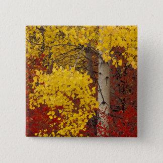 NA USA, Washington, Wenatchee medborgareForest. Standard Kanpp Fyrkantig 5.1 Cm