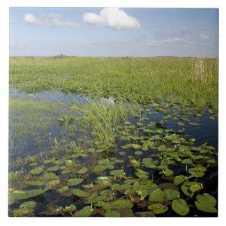 Näckrosor och sawgrass i Florida everglades 2 Kakelplatta