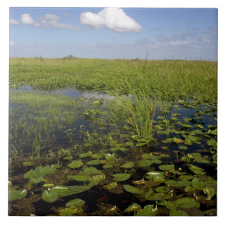 Näckrosor och sawgrass i Florida everglades Kakelplatta
