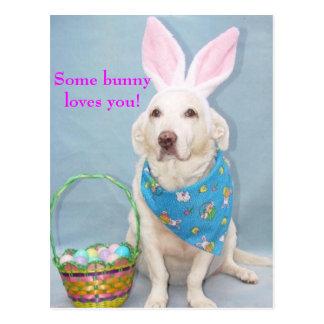 Någon kanin älskar dig! vykort