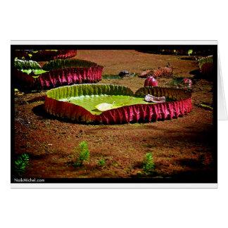 Naik Michel fotografi Hawaii 007 Hälsningskort