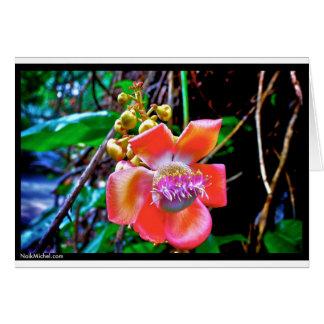 Naik Michel fotografi Hawaii. Tapetbilder Hälsningskort
