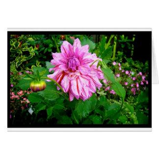 Naik Michel fotografi - Hortensiahusträdgård P Hälsningskort
