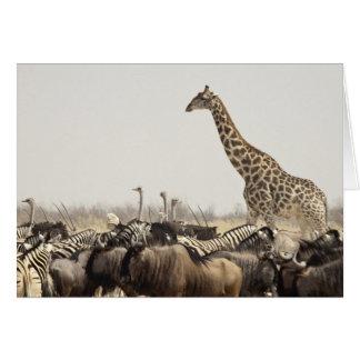 Namibia Etosha nationalpark. En lone giraff Hälsningskort