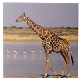 Namibia: Etosha nationalpark Kakelplatta