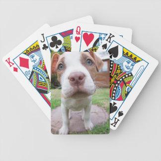 nära näsa för brunt för groptjurhund spelkort