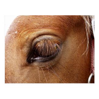 Nära övre för häst-/ponnyöga - hästfotografi vykort