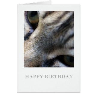 Nära övre för Maine Coon, fotografifödelsedagkort Hälsningskort