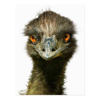 Nära övre för rolig blända Emu Vykort