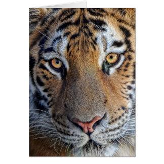 Nära övre för tiger hälsningskort