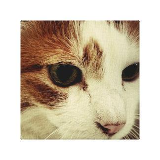 Nära övre kattunge canvastryck