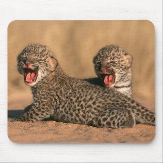 Närbild av den nyfödda leoparden (pantheraen musmatta