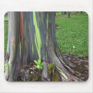 Närbild av det färgrika skället för eucalyptusträd musmatta