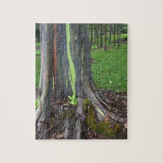 Närbild av det färgrika skället för eucalyptusträd pussel