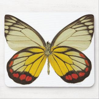 Närbild av en fjäril 3 musmatta