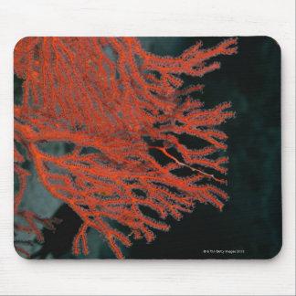 Närbild av en Gorgonian havsfläkt Musmatta