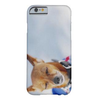 Närbild av en hund barely there iPhone 6 skal