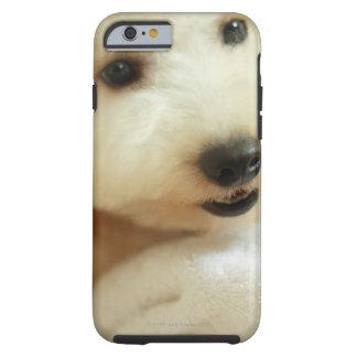 Närbild av en miniatyrpudel 2 tough iPhone 6 case