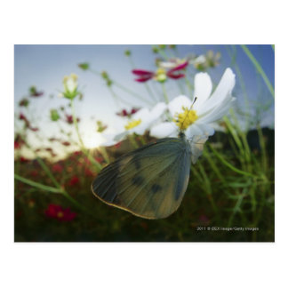 Närbild av fjärilen på blomma vykort