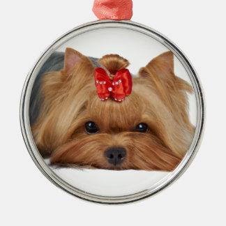 Närbilden av den Yorkshire terrier'sen tystar ned Julgransprydnad Metall