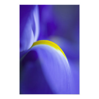 Närbilden specificerar av en blåttflaggairis. fotontryck