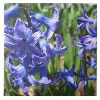 Nätt blomma för blåtthyacintträdgård kakelplatta