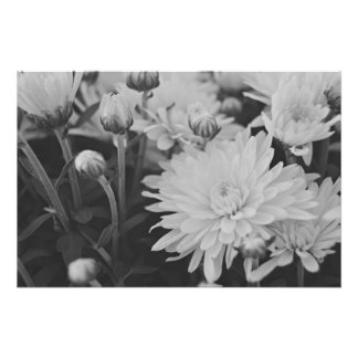 Nätt blommor fototryck