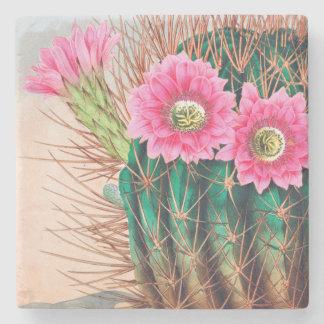 nätt kaktus stenunderlägg