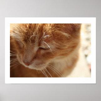Nätt kattunge av Niki Poster