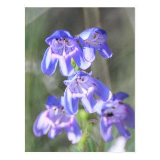 Nätt purpurfärgade vildblommar vykort