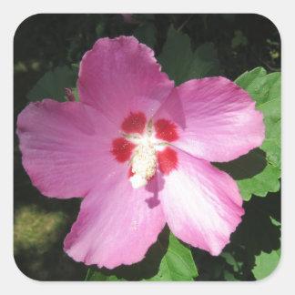 Nätt rosa ros av den Sharon blomman Fyrkantigt Klistermärke